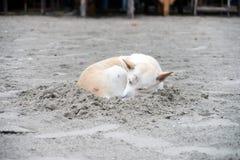 Dog sleeping on sand beach Royalty Free Stock Image