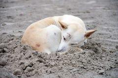 Dog sleeping on sand beach Royalty Free Stock Photos
