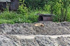 Dog sleeping on sand Royalty Free Stock Image