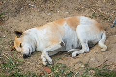 Dog sleeping on the sand hole Stock Image