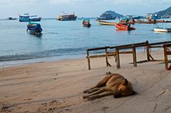 Dog sleeping on the sea coast Stock Photos
