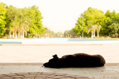 Dog sleeping in shade on hot summer day Royalty Free Stock Photo