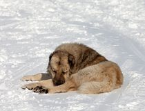 Dog sleeping on slope Royalty Free Stock Photos