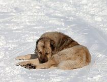 Dog sleeping on slope Royalty Free Stock Photos