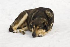 Dog sleeping on snow Royalty Free Stock Photo