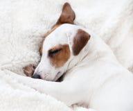 Dog sleeping on a soft blanket Stock Photography
