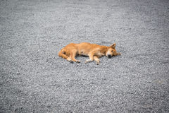 Dog is sleeping on stone texture Royalty Free Stock Images