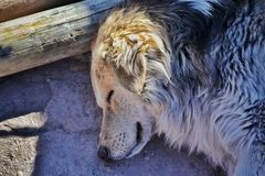 A dog sleeping. Street dog sleeping Stock Images