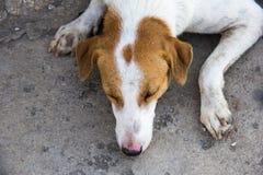 Dog sleeping Stock Photography