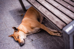 Dog sleeping under bench Stock Photos