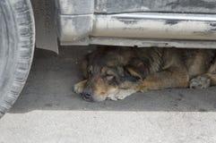 Dog Sleeping Royalty Free Stock Photos