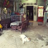 Dog sleeping in Vietnamese store. Wide view of a dog sleeping on a concrete floor at the entrance to a store located in Hoi An, Vietnam Stock Photo