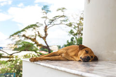 Dog sleeping in Wat Kaew temple. Afternoon Royalty Free Stock Images