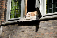 Dog. Sleeping in the window Royalty Free Stock Photos