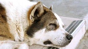 Dog sleeping zoom in head face Stock Photos
