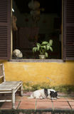Dog sleeps beneath window. A dog takes a nap beneath a colorful window with potted plant in Hoi An, Vietnam Stock Image