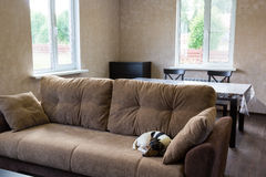 Dog sleeps on couch in the living room of a country house Stock Photo