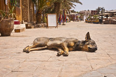 A dog sleeps on a street Stock Photography