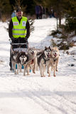 Dog sleigh racing. Six-dog husky pack racing at the first edition of the Belis Cup (Jaunuary 31-February 2, 2014), a dog sleigh competition in Balcesti, Cluj stock photography