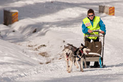 Dog sleigh racing in Transylvania. Two-dog sleigh pulled by huskies racing at the first edition of the Belis Cup (Jaunuary 31-February 2, 2014), a dog sleigh royalty free stock images