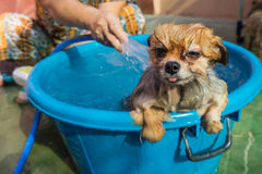Free Dog Slept In The Bath Royalty Free Stock Photos - 70050628