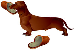 Dog  with a slipper Royalty Free Stock Photos