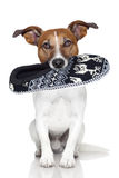 Dog slipper mouth. Dog  wool slipper in mouth Royalty Free Stock Photos