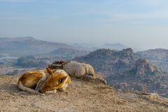 Dog slipping at the top of Hampi Royalty Free Stock Images