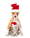 Dog and small cat in red christmas hats sitting together. isolated on white Royalty Free Stock Photos