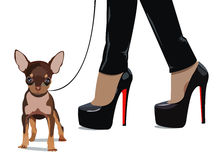 Dog  small drawing women foot Royalty Free Stock Images
