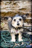Dog. Small dog stepping on rope at the crag Stock Image