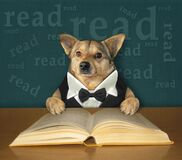 Free Dog Smart Reads Book At Desk Royalty Free Stock Images - 215505639
