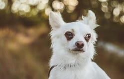 Dog. Smart dog thinking Royalty Free Stock Photo