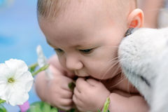 Dog is smelling child's ear Stock Photography