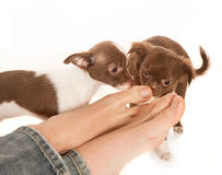 Dog smelling feet Stock Photography