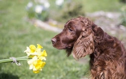 Dog smelling flower Stock Photo