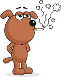 Dog Smoking Stock Photos