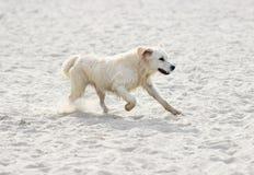 dog snabb running arkivbild