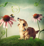 Dog and snail in friendship in fantasy landscape Royalty Free Stock Image