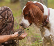Dog sniff snipe in the hands Stock Photography