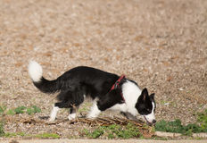 Dog sniffing in a brown field Royalty Free Stock Image