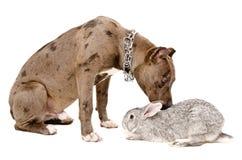 Dog sniffing rabbit Stock Photo