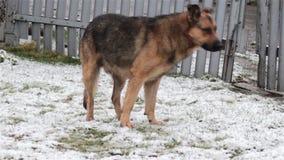 Dog sniffs winter stock footage