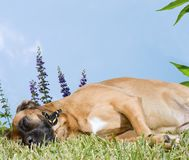 Dog Snoozing in a Field of Flowers Stock Photo
