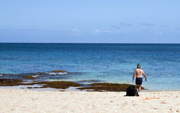 Dog and Snorkler. Dog and Snorkeler on the beach Royalty Free Stock Photos