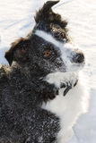 Dog in snow Stock Photos