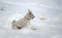 Dog in the snow Stock Photos