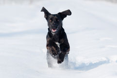 Dog  in the snow Stock Photos