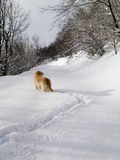Dog into the snow Royalty Free Stock Photography