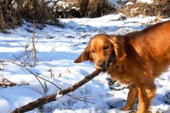Dog at snow Stock Photography